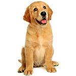 三个月的狗狗吃多少狗粮_狗狗一直吃狗粮好吗_请问,你们都给狗狗吃什么狗粮