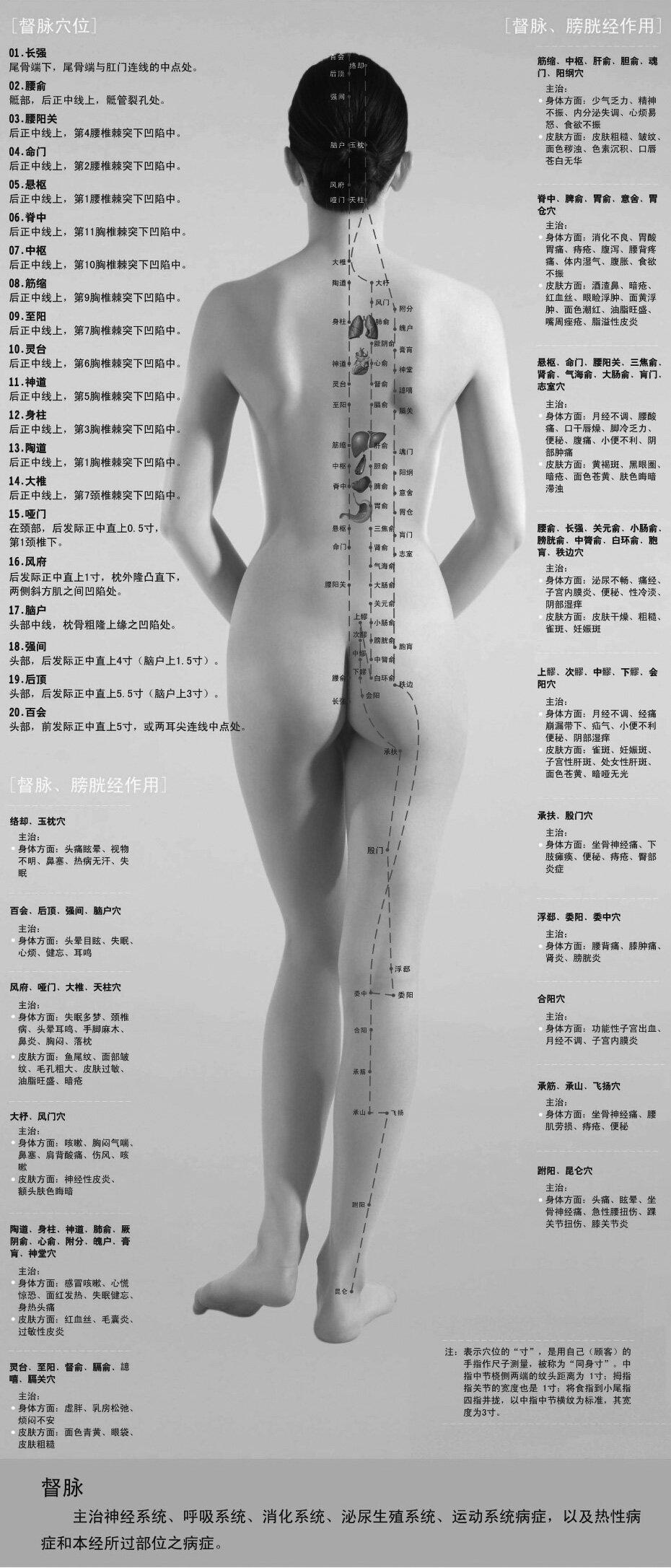 人体背部穴位图解大全 人体背部穴位对应器官